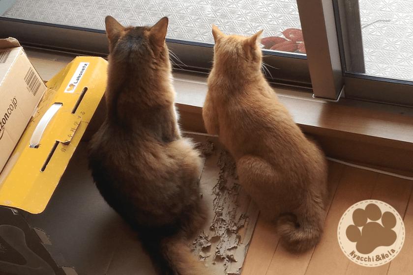 にゃっち&ノーラ(2018年9月)