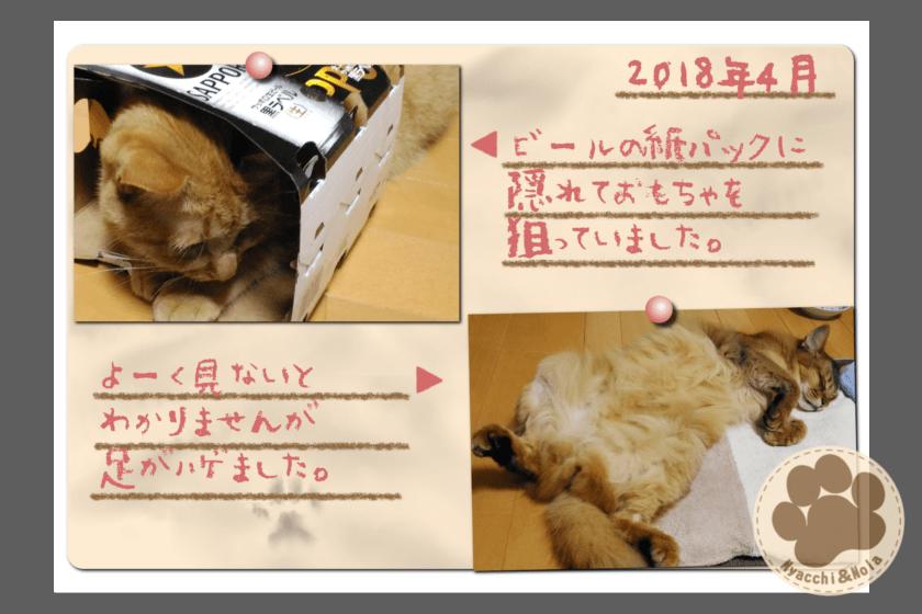 フォトアルバム(2018年4月)