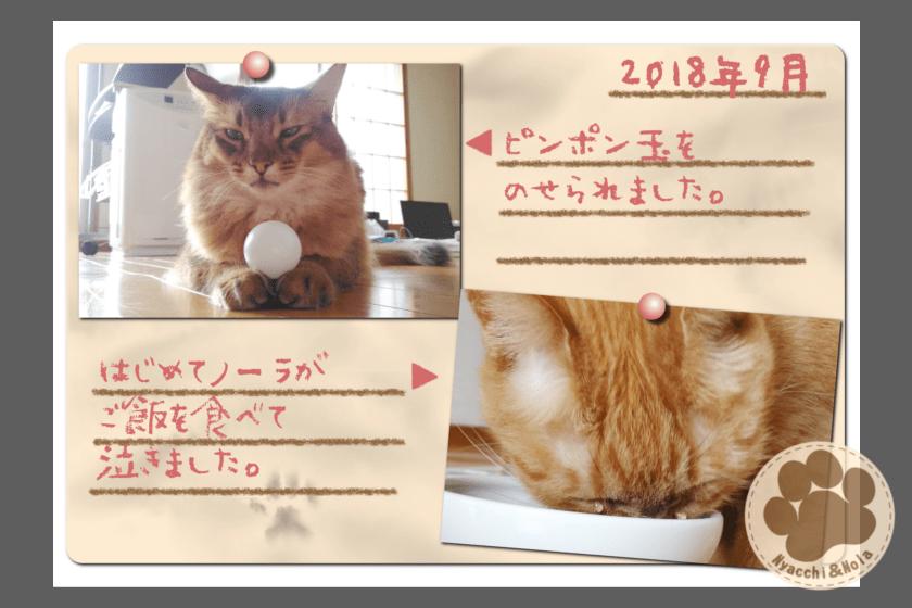 フォトアルバム(2018年9月)