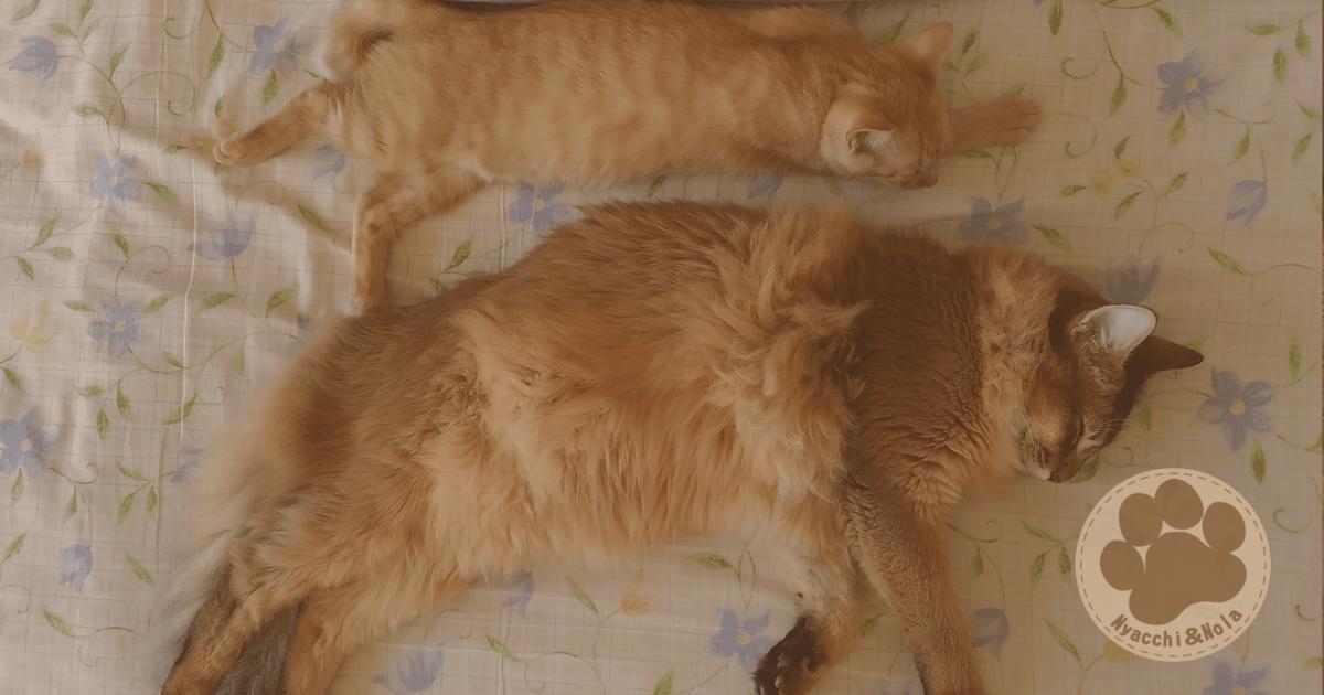 にゃっち&ノーラ(2015年12月)