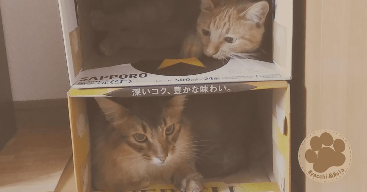 にゃっち&ノーラ(2016年6月)