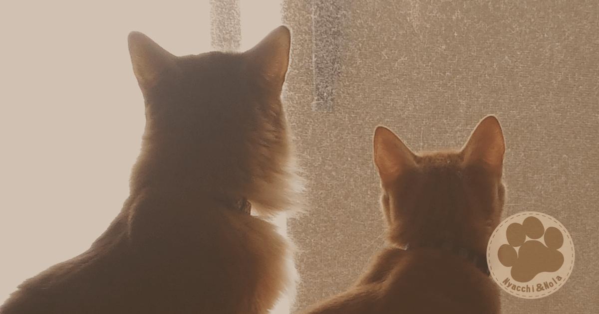 にゃっち&ノーラ(2016年8月)