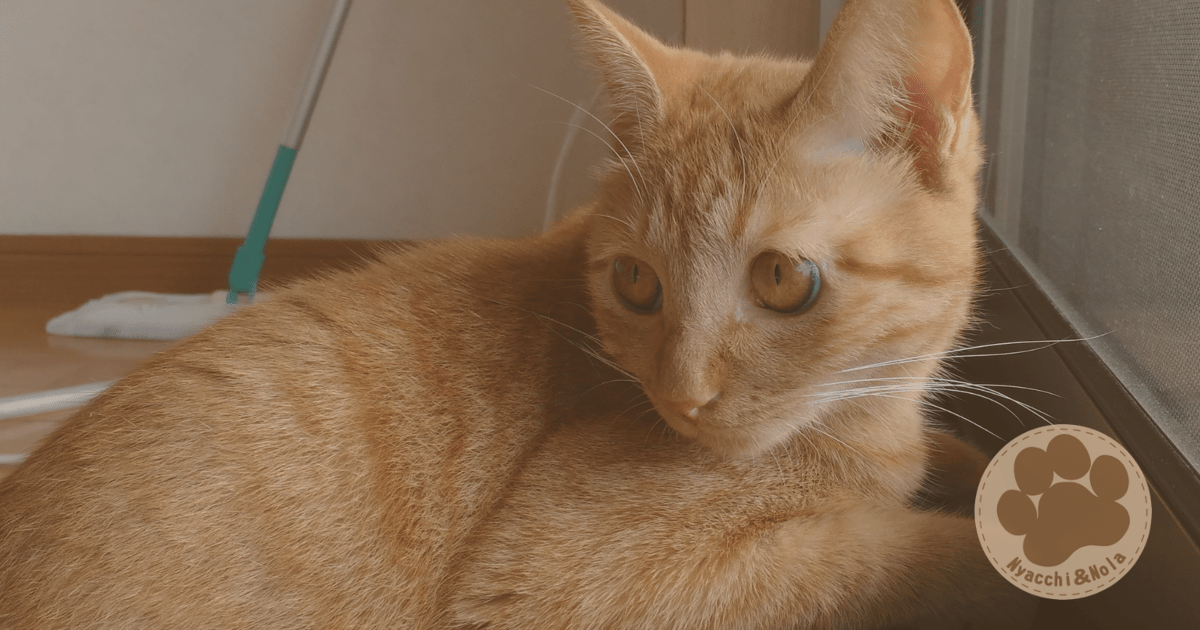 猫が語る、ノーラが1歳になった話