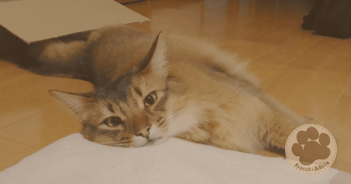 猫が語る、慢性腎不全になった話