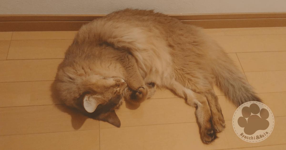 にゃっち(2017年8月)