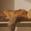 猫が語る、2歳のフォトアルバムが作られた話(後編)