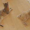 にゃっち&ノーラ(2018年7月)
