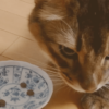 にゃっち(2018年12月)