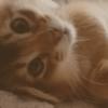 腎臓療法食 | 猫かにゃんこかぬこなのか