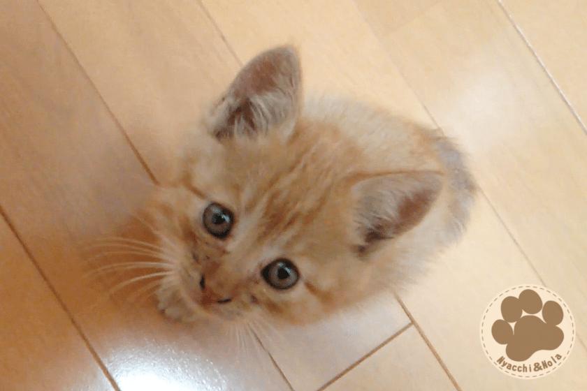 ノーラ(2015年10月)